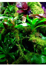 Bromelia, Tillandsia, Orchidea, moha