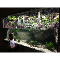Piranha bemutató palodárium