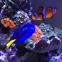 375 literes Tengeri akvárium