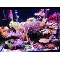 135 literes tengeri akvárium