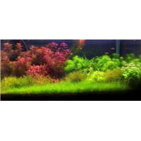 """240 literes """"Holland"""" stílusú akvárium dimmelhető világítással"""
