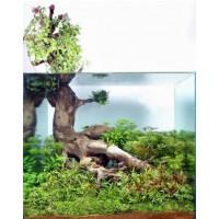90 literes növényes akvárium /Ficus pumila/
