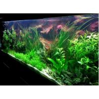 720 literes hátterezett növényes akvárium