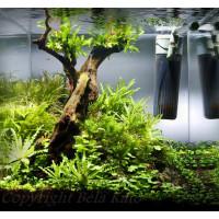 18 literes nano garnélás akvárium
