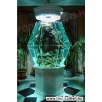 Egyedi formájú tengeri akvárium