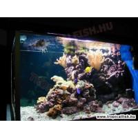 2900 literes tengeri akvárium