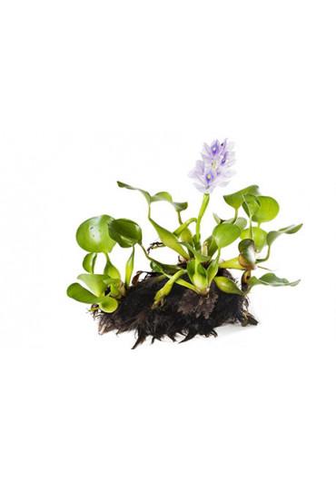 Tavi növény