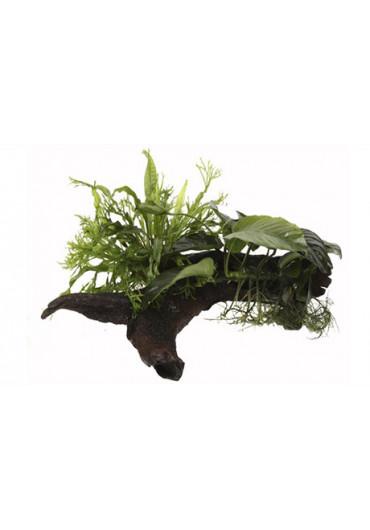 AquaDecor növények