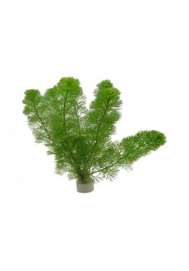 Szálas, vágott növények