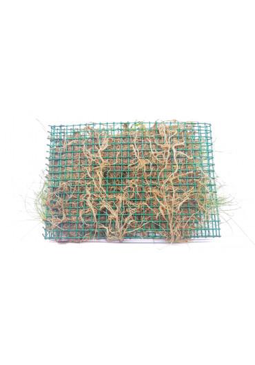 Eleocharis acicularis - Tropica nagy dobozos