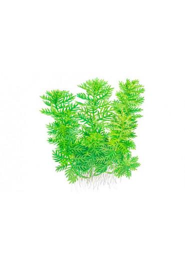 Hottonia palustris - Tropica