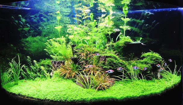 Bevezetés a növényes akvarisztikába