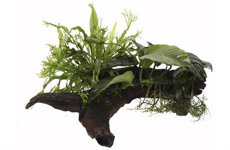 Növény vásárlás